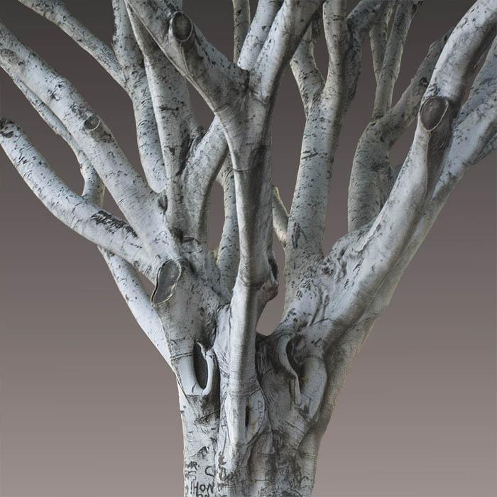 Urban Tree Portraits (2012—)