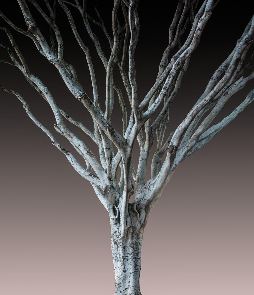 Tree Talk: Thursday, July 30, 1 pm ET