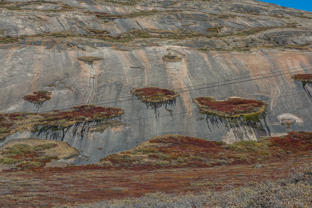 Rock with tapestry-like vegetation